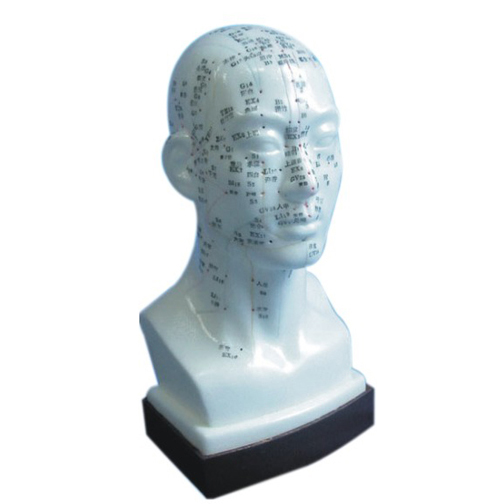 Acupuncture Model - Head  - N13
