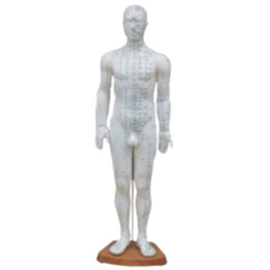 Acupuncture Model - Male Full Body - 60 cm  - N13